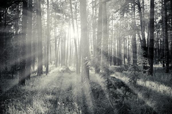 LocPage_AUX_Forest